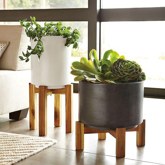 Bachelor Pad Living Room Plant 2
